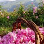 Долина роз – золотое поле под розовым мрамором