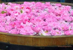 Праздник Розы