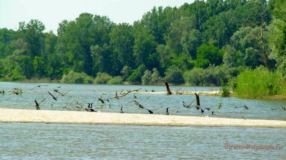 Птицы на территории парка Персина
