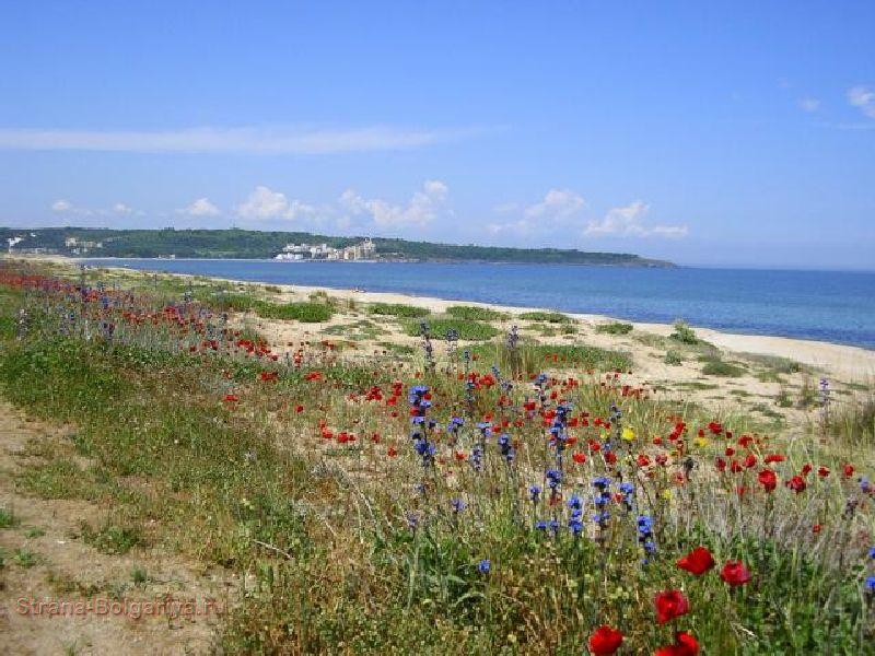 Цветы возле пляжа Курорт Дюны