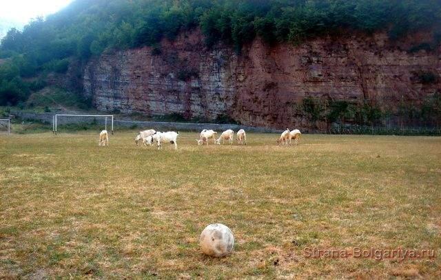 Стадион Бов